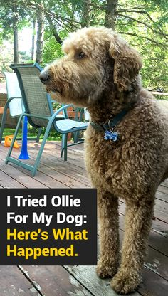 Why I'm Only Giving My Dog Ollie From Now On