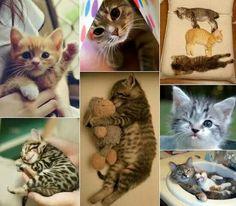 Straight kitty kuteness overload ♡