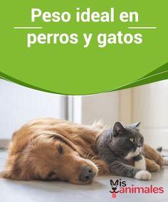 48 Ideas De Gatos Salud Gatos Mascotas Perro Gato