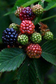 Beautiful berries..