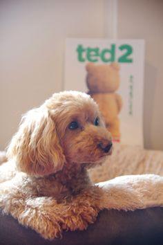 テッドもベッドもモフモフ #犬のテッド #テッド #変なクマ #ted #ted2 #TEDLOCKED