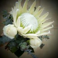Australian native flower bouquet Green Flowers, Tropical Flowers, Love Flowers, Wedding Flowers, Protea Flower, Australian Native Flowers, White Gardens, Photo On Wood, Native Plants