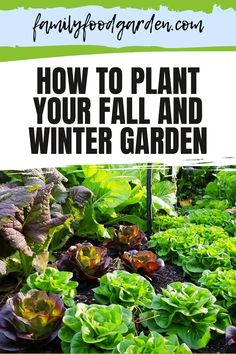 Learn how to plant your fall and winter garden with Family, Food + Garden. Follow a planned schedule so you know the the right time for planting the right vegetables that you want to harvest in the cooler seasons. There are several hardy cold climate friendly vegetables that would be a treat to see flourish in your garden. What a delight for you to pluck them out of your yard and prepare them for your family dinner. Learn more about it here. #fallgarden #wintergarden #fallandwintergarden Healthy Fruits And Vegetables, Winter Vegetables, Permaculture Farming, Greenhouse Growing, Autumn Garden, Small Trees, Growing Plants, Easy Cooking, Garden Planning
