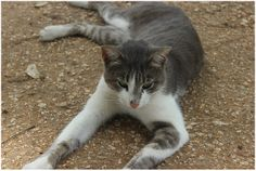 Felix,a cat in the park near my home.Felix likes dogs but is a bit aware of people.