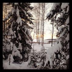 Vinter i Norrrbotten