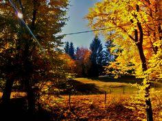 Autumn in Romania. #october #fallcolors #autumn #romania #fallphotography #perfectplace