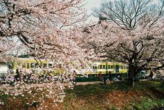 15 處必訪日本最美麗的村莊 | tsunagu Japan