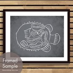 FUGU Butcher Diagram of a Blowfish -8x10 Print - the word shop on etsy  $12.95 - BOUGHT IT