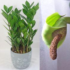 Pflanzenbestimmung Zimmerpflanzen