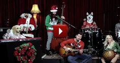 A Doggie Band Plays Little Drummer Boy - You Gotta See This - For more great recipes, motivation, tips, humor, and more join our awesome FREE online support group: click on --->  https://www.facebook.com/groups/AHealthyLife2013