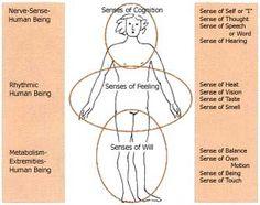 12 senses anthroposophy - Google Search