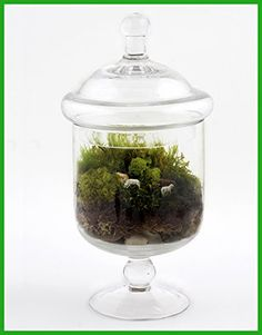 Sweet Dreams Terrarium * To view further for this item, visit the image link.