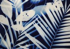 The Nature of Blue Cyanotypes Sun Prints, Alternative Photography, Cyanotype, Ceramic Artists, Art Object, Art Gallery, Ceramics, Nature, Inspiration