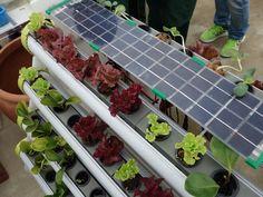 以太陽能供電的水耕設備
