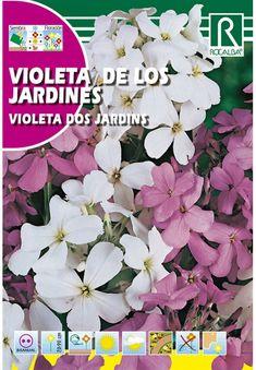 Évelő virágok : Hölgyestike Plants, Gardens, Plant, Planets