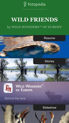 Wild animals, as you have never seen them. Presented by Wild Wonders of Europe and Fotopedia.   *** This app requires an Internet connection...