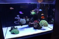 Beautiful Bonsai style minimalist reef aquarium