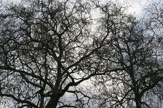 Kew Gardens Herbarium in London, Greater London