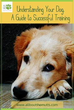Understanding Your Dog, A Guide to Successful Training