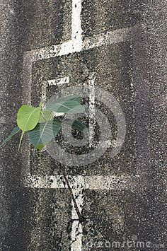 Lone plant growing out of a wall