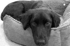 Pet-of-Week-Tina.png 960×640 pixels