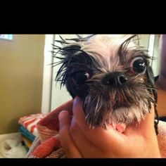 it totally looks like my dog in the shower....MAGGIE MAE MULLINS.............Love It