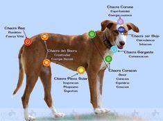 Saiba mais sobre o reiki em animais!!  http://www.fisioanimal.com/reiki-para-animais/