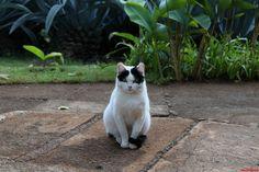 A Beautiful Cat That I Saw In Tanzania. - http://cutecatshq.com/cats/a-beautiful-cat-that-i-saw-in-tanzania/