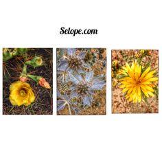 #tres #flores de #verano #summer #flowers