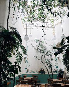 "Poketo on Instagram: ""Beautiful Rosetta. Restaurant Mexico City, courtyard"