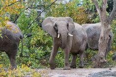 Première course bâloise pour les éléphants