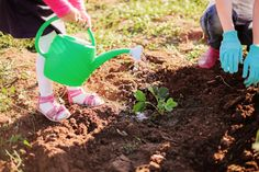 If you want to help your kid cultivate his green thumb, you've got to get him some #plants that he can easily care for. Luckily, there are plenty of easy-to-grow plants at your local #gardening store that are perfectly plantable for little hands. #kids http://www.organicauthority.com/your-kids-will-have-a-blast-planting-these-easy-to-grow-plants/