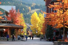 Enjoy Thanksgiving weekend in Whistler resort during the very colorful Fall season. When the trees change color is creates a magnificent scene of brilliant colors to enjoy as you go sightseeing in the Sea To Sky Corridor. Walking around Whistler village is always fun along with sightseeing on the mountains. Happy Thanksgiving to all and make sure to enjoy lots of Turkey along with the beautiful Fall season colors of the resort. Photo below is from Whistler village www.resortquestwhistler.com