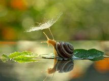 Didn't realize a snail could look so beautiful: Ukrainian photographer Vyacheslav Mishchenko uses macro photography to capture little-seen aspects of nature. From TwistedSifter Animal Photography, Amazing Photography, Nature Photography, Photography Series, Travel Photography, Beautiful Creatures, Animals Beautiful, Animals And Pets, Cute Animals