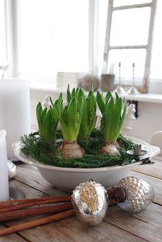 Jul hyacinter kanelstång