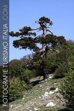 fotografie, turismo, italia, montagna, pollino, pino loricato,