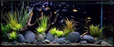very cool river rock/grass for aquarium - i feel a DIY coming on...