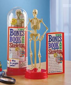 Give curious children a peek inside themselves with The Bones Book & Skeleton set. The detailed, true-to-life skeleton has 24 moving joints. It arrives with a book. Hands On Learning, Fun Learning, Teaching Kindergarten, Teaching Kids, Reading Facts, Bone Books, Lakeside Collection, The Bell Jar, Future Career