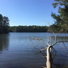 Walking along the shores of Lake Johnson NC