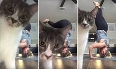 A woman set up a camera to record herself practicing yoga poses when her cat video bombs and covers the entire shot. It's unclear where the video was shot and who the owner is.