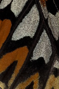 Close-up photograph of Butterfly Wing by:  Darrell Gulin