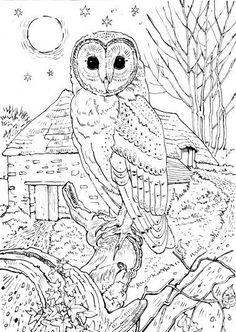color Owl Coloring Pages, Detailed Coloring Pages, Printable Adult Coloring Pages, Christmas Coloring Pages, Coloring Books, Kids Coloring, Colouring In, Coloring Sheets, Colouring Pages For Adults