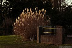 A walk through the park #2 by Gerhard Hoogterp