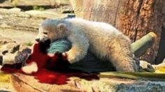 Top 10 CRAZIEST Bear Attacks On Human Caught On Camera 2016