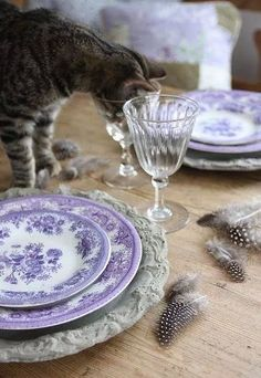 lilac&lavendercottage.quenalbertini2: Table setting and kitten