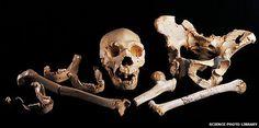 Leg bone gives up oldest human DNA