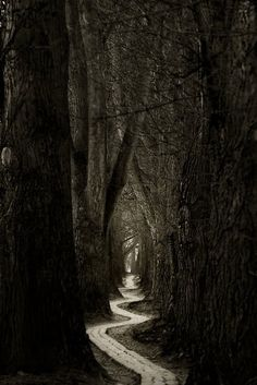 I like how the path draws you in automatically into the woods creating a spooky atmosphere.