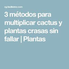 3 métodos para multiplicar cactus y plantas crasas sin fallar   Plantas