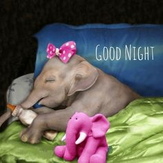 Good Night Images Bedtime The Moon . Good Night Images Bedtime good night images bedtime the moon Lovely Good Night, Romantic Good Night, Good Night Prayer, Good Night Blessings, Good Night Sweet Dreams, Good Night Image, Good Morning Good Night, Good Night Greetings, Good Night Messages