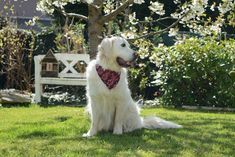 Cute Sammy wears our Lucu Bandana. All of our Bandanas are available in 4 different sizes to fit every furiend! Dog Beach, Dog Bandana, Bandanas, Dog Accessories, Bali, Pup, Dogs, Animals, Animales